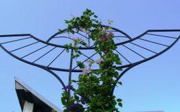 augalu laikikliai